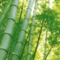 Uniek in Frankrijk en Europa - 15ha grote Bamboepark in Anduze - Gard