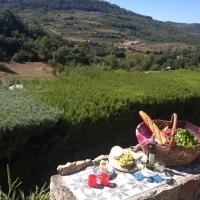 Druivenpluk is begonnen in de Languedoc