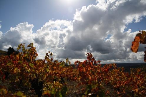 Roquebrun Ceps (12)