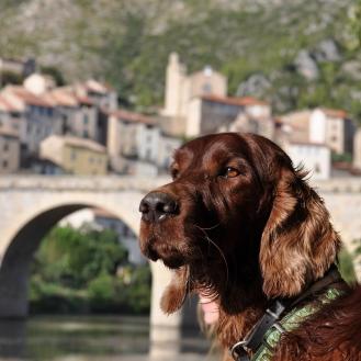 Roquebrun Ceps