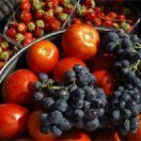 De boer op: zelf fruit plukken!