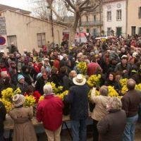 La Fête du Mimosa  - Roquebrun 2016