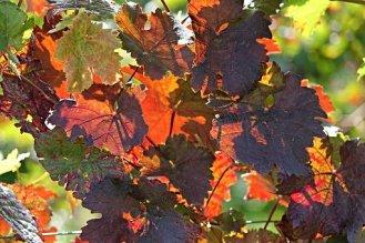 automne-2