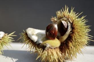 chestnut-2844456_960_720